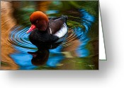 Christopher Holmes Photography Greeting Cards - Resting In Pool Of Colors Greeting Card by Christopher Holmes