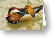 Rich Colors Greeting Cards - Resting Mandarin Greeting Card by John Gryphon