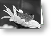 Dion Skipper Greeting Cards - Resting Greeting Card by Michael Peychich