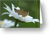 Dion Skipper Greeting Cards - Resting place Greeting Card by Michael Peychich