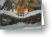 Thomas Luca Greeting Cards - Resting Tiger Greeting Card by Thomas Luca