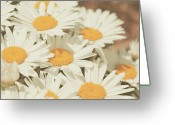 Revival Greeting Cards - Retro Daisies Greeting Card by Poppy Thomas-Hill