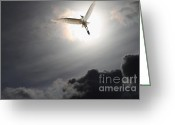 Migrating Bird Greeting Cards - Return To Eternity Greeting Card by Wingsdomain Art and Photography