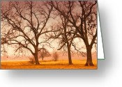 Winter Trees Digital Art Greeting Cards - Revelation Greeting Card by Iris Greenwell