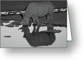 Waterhole Greeting Cards - Rhino Reflection Greeting Card by Bruce J Robinson