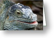 Threatened Species Greeting Cards - Rhinoceros Iguana Greeting Card by Fabrizio Troiani
