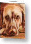 Pet Pastels Greeting Cards - Rhodesian Ridgeback Greeting Card by Billie Colson