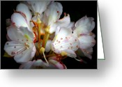 Debbie Johnson Greeting Cards - Rhododendron Explosion Greeting Card by Deborah  Crew-Johnson