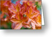 Flower Photos Greeting Cards - Rhododendron flowers Greeting Card by Frank Tschakert