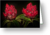 Exotic Flora Greeting Cards - Rhododendron Greeting Card by Svetlana Sewell