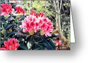 Most Painting Greeting Cards - Rhododendrons of British Properties Greeting Card by David Lloyd Glover
