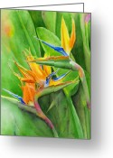 Bird Of Paradise Greeting Cards - Rhonicas Garden Greeting Card by Karen Fleschler
