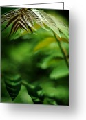 Feathery Greeting Cards - Rhus typhia - Smooth Sumac Greeting Card by Rebecca Sherman