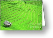 Terraces Greeting Cards - Rice field terraces Greeting Card by MotHaiBaPhoto Prints