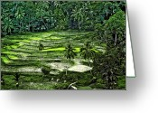 Terraces Greeting Cards - Rice Paddies Greeting Card by Steve Harrington