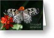 Gossamer Greeting Cards - Rice Paper Butterfly Greeting Card by Sabrina L Ryan