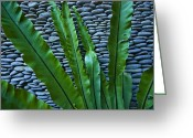 Asian Architecture And Art Greeting Cards - Rich Green Fern Leaves Against A Wall Greeting Card by Jason Edwards