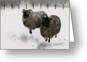 Livestock Tapestries - Textiles Greeting Cards - Ricks Farm Greeting Card by Carolyn Doe