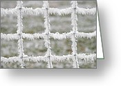Grid Greeting Cards - Rime covered fence Greeting Card by Christine Till
