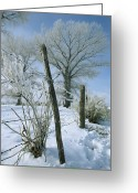 Barbed Wire Fences Photo Greeting Cards - Rime From Rare Fog Coats Fence Greeting Card by Gordon Wiltsie