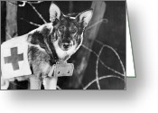 Alsatian Greeting Cards - Rin-tin-tin (1916-1932) Greeting Card by Granger