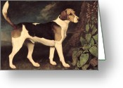 Hound Greeting Cards - Ringwood Greeting Card by George Stubbs