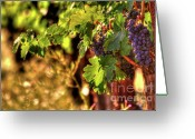 Grapevines Greeting Cards - Ripe Cabernet 3 Greeting Card by Mars Lasar