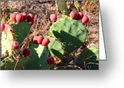 Hot Tuna Greeting Cards - Ripe Prickly Pear Cactus Greeting Card by Roena King