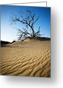 Sand Dunes Greeting Cards - Rippled Sand Dunes Outer Banks NC - Weathered Greeting Card by Dave Allen