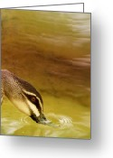 Green Water Greeting Cards - Ripples Greeting Card by Holly Kempe