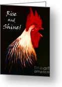 Wild-life Greeting Cards - Rise and Shine - Rooster Clucking - Painterly Greeting Card by Wingsdomain Art and Photography
