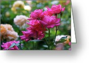 Rose Greeting Cards - Rittenhouse Square Roses Greeting Card by Rona Black