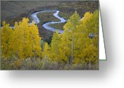 Butte Creek Greeting Cards - River Bend and Aspen Trees Greeting Card by Timothy Johnson