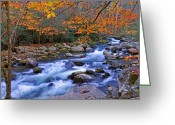Smoky Mountains Greeting Cards - River Birch Overhangs Big Creek Greeting Card by Alan Lenk