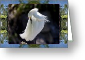Hot Springs Greeting Cards - River Egret Greeting Card by Bell And Todd