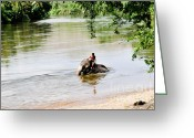 Elephant Ride Greeting Cards - River Elephant  Greeting Card by Carrie Sexauer