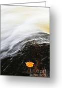 Maple Leaf Greeting Cards - River in fall Greeting Card by Elena Elisseeva