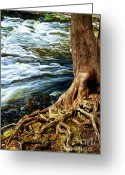 Flowing Greeting Cards - River through woods Greeting Card by Elena Elisseeva