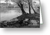 Flood Plain Greeting Cards - River-Washed Roots Greeting Card by Susan Isakson