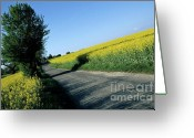 Rape Greeting Cards - Road going through oilseed rape fields Greeting Card by Sami Sarkis