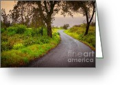 Moisture Greeting Cards - Road on Woods Greeting Card by Carlos Caetano