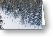 Winter Trees Greeting Cards - Road Side Snow Greeting Card by Lisa  Spencer