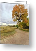 Colorado Greeting Cards Greeting Cards - Road To Dads Place Greeting Card by James Steele