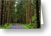 Olympic National Park Greeting Cards - Road to Hoh Greeting Card by Benjamin Yeager