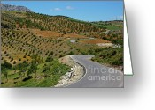Cultivated Landscapes Greeting Cards - Road winding between fields of olive trees Greeting Card by Sami Sarkis