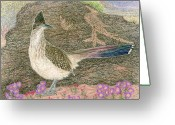 Sandias Greeting Cards - Roadrunner Greeting Card by Tim McCarthy
