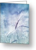 Autumn Season Greeting Cards - Roadside Blues Greeting Card by Priska Wettstein
