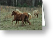 Equine Greeting Cards - Roan and Palomino Running - c4966c Greeting Card by Paul Lyndon Phillips