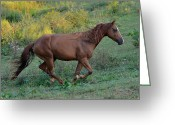 Animals Greeting Cards - Roan at Up Hill Run  - c0083c Greeting Card by Paul Lyndon Phillips