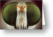 Animal Themes Greeting Cards - Robber Fly Greeting Card by Yousef Al Habshi
